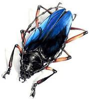 Blue Beetle by otas32