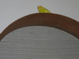 One Strange Bird by dutchfreak25
