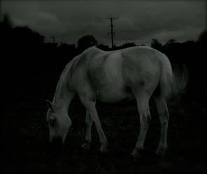 Moonlighting by louwilson