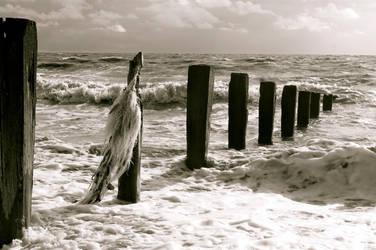 English Sea by louwilson