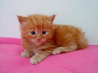 Kitty by Simieski