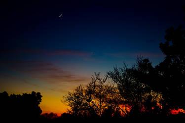 Sunset Through The Trees by RyanRadical
