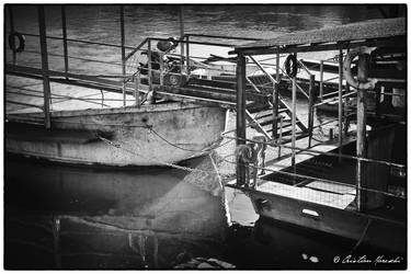 Dog on a river boat - Pavia Italy by Bingo7