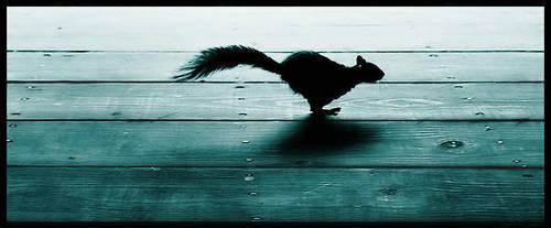 Run by Ciril