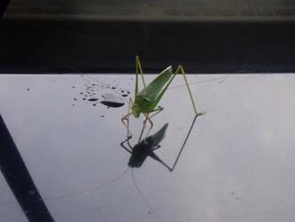 Grasshopper by Suiki