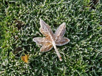 Frozen Leaf by Suiki