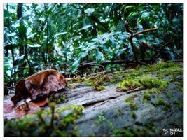 Into the Jungle by Manre