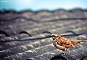 Wings by Manre