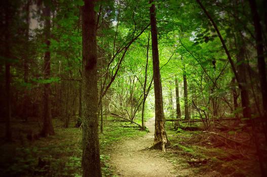 Forest by LietingaDiena