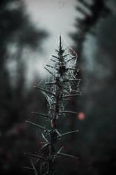 Red by DesiresOfTheSky