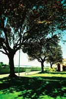 cross processed tree by French-Errorist