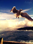 Spread your Wings by xPerfugium