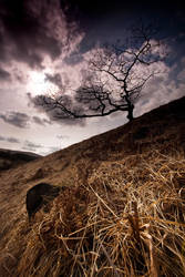 Tree And Rock by Phil-Norton