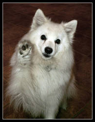 High Five by Laix