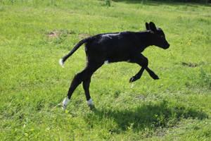 lil Moo on the run by purstotahti