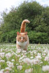 ginger cat among flowers by purstotahti