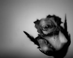 B_W rose by d3usm4ximus