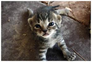 Kitten.. by Kalven