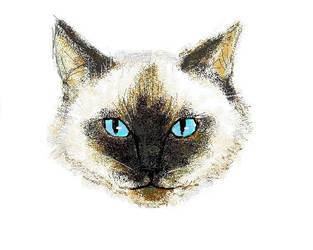 cat in paint by dillian
