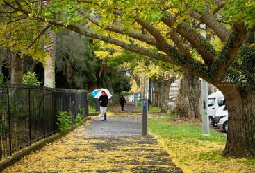 Autumn Path by SukhRiar