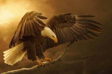 Eagle by TatyanaHappy