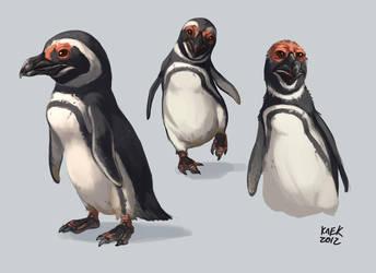 Magellanic Penguin Study by Kaek