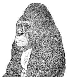 gorilla by marzini