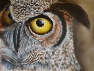 Great Horned Owl by marie-catss