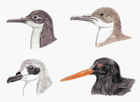 Prehistoric Canaries: Seabirds by DiegoOA