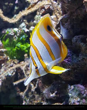 Tropic Fish by Esmeralda-stock
