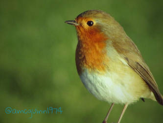 Robin by D1scipl31974