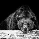 bear by slatkatajna