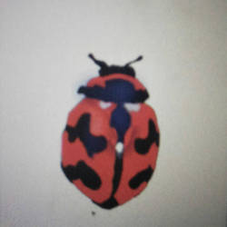 lady bug by wolfball