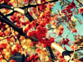 Autumn minds by summerly-sunshine