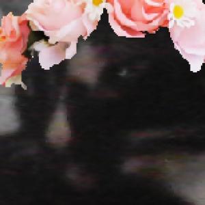 Rani-Rani's Profile Picture
