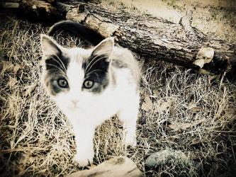 The Little Hunter by pjhblackcat