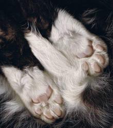 pink jellybean toes by essencestudios