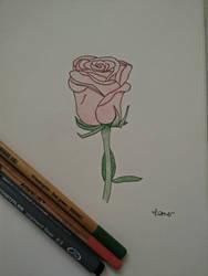 Rose by DoctorTM