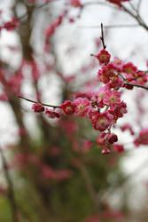 still flower by akiraxpf