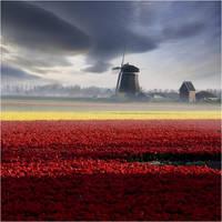 Holland. by adamsalwanowicz