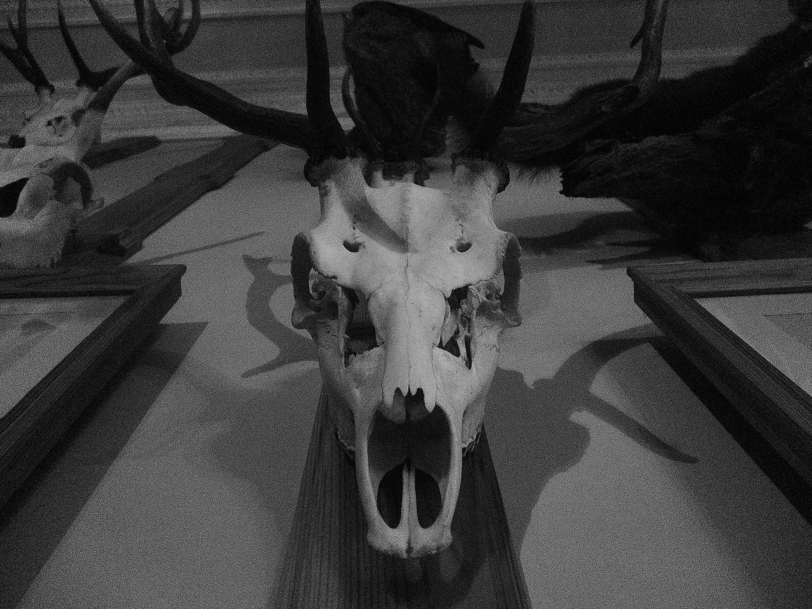 skull. by Brebenel-Silviu