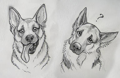 German Shepard sketches by marlynxTLK