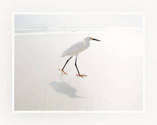 Bird on Beach by Patme
