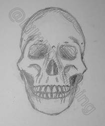Human skull by LilithDay