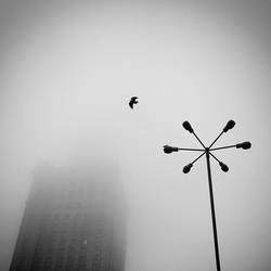 Falling or Flying by EmilStojek