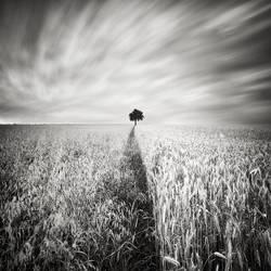 In The Fields III by EmilStojek