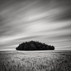 Tree Island by EmilStojek