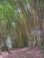 Belize Path by numapompilius