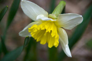 First Bloom by numapompilius