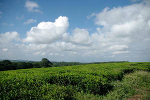 Landscape Malawi 2008 by numapompilius